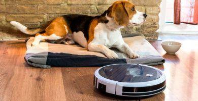 robots aspiradores aptos para mascotas